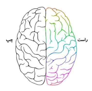 چرا مغز انسان دو نیمکره دارد؟