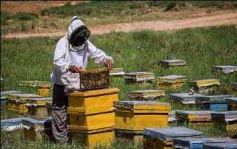 رشته پرورش زنبور عسل