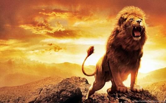10 حقیقت در مورد شیرها که احتمالا نمیدانستید