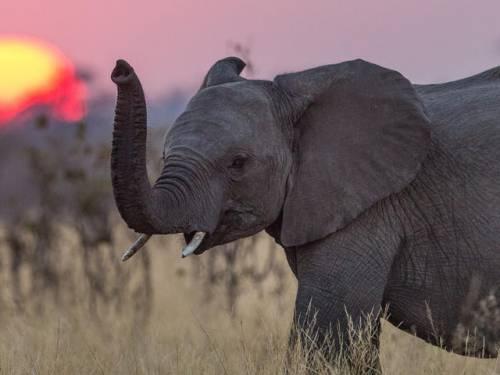 ۳ حیوانی که زمان مرگ شان را می دانند