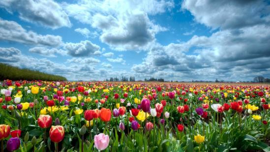 نحوه به وجود آمدن گل هایی که می شناسیم..