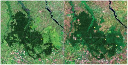 جنگل مابیرا، اوگاندا
