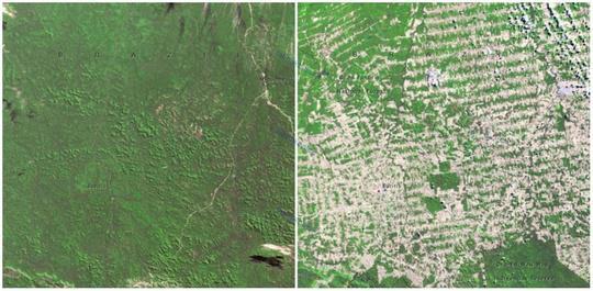 جنگل های روندوینا، برزیل
