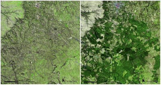 جنگل اوروگوئه