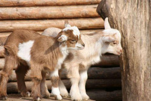 15 حقیقت جالب و حیرت آور درباره حیوانات