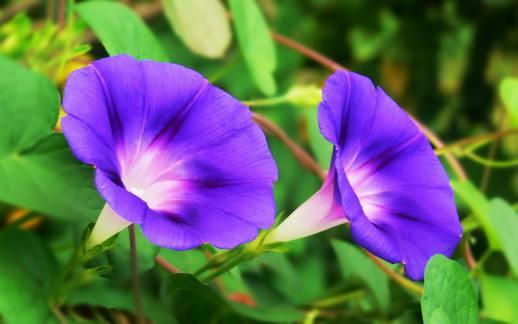 کمک گل پیچک به شکلگیری حیات در سیارات دیگر